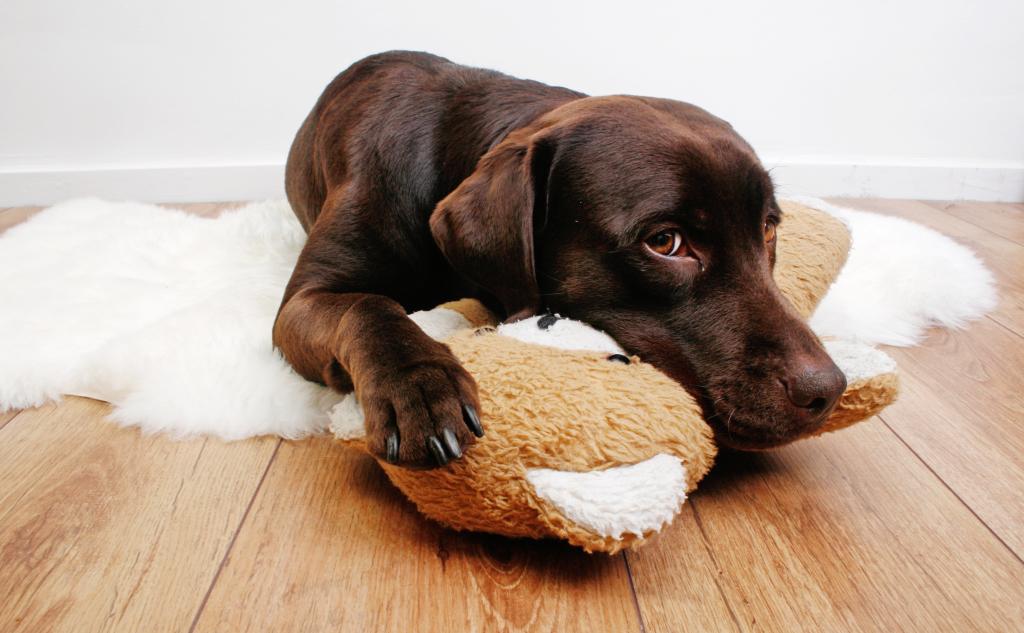 stockvault-labrador-dog-cuddling-with-teddy-bear131116  Servicii stockvault labrador dog cuddling with teddy bear131116